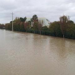 Metaponto allagata dopo l'alluvione