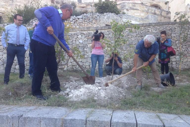Piantati 24 alberi per celebrare il terzo anniversario dal titolo ECoC