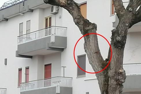 albero danneggiato