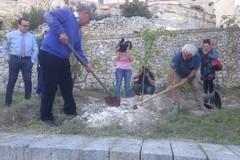 Matera 2019, piantati 24 alberi per celebrare il terzo anniversario dal titolo ECoC