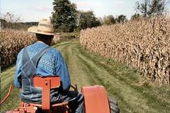 Il comparto agricolo è quasi a secco