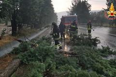 Maltempo, vari alberi caduti