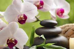 Feng Shui il nuovo modo di concepire il benessere