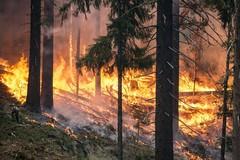 Continua il flagello degli incendi dolosi. Una sciagura senza fine