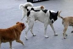 Salvaguardare il benessere degli animali