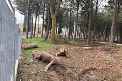 Lavori parco Serra Venerdì, s.o.s. per taglio alberi