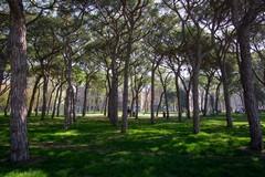 Via libera al piano del verde