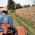 L'agricoltura lucana in ginocchio. Dati allarmanti e raccolti a rischio