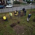 La Fondazione Matera2019 pianta alberi