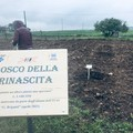 """Inaugurato il """"Bosco della rinascita"""""""