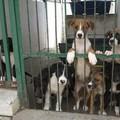 300 euro all'anno per chi adotterà un cane