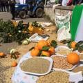 Matera, i contadini lucani e pugliesi buttano grano e clementine