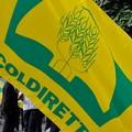 Proroga dei permessi per gli stagionali, soddisfazione di Coldiretti