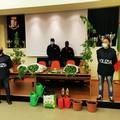 Piantagione di cannabis, arrestati due materani