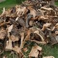 Furto aggravato di alberi d'ulivo