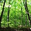 Arrivano i fondi per la riforestazione