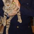 """""""O la borsa o...il gatto """", animale preso in ostaggio per estorcere denaro"""