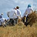 """Agricoltura,  """"Giornata del ringraziamento"""" a Matera"""