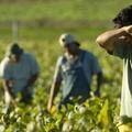 Agricoltura, a Matera approda un progetto italo-spagnolo