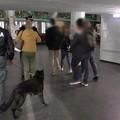 Controlli davanti alle scuole, droga scovata dal fiuto dei cani
