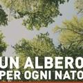 """A Matera si pianta """"Un albero per ogni nato"""""""