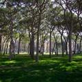 Più verde nelle città, Regione stanzia fondi per i Comuni