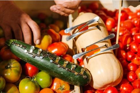 Progetto Orchestra vegetale