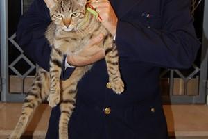 Il gatto recuperato dopo l'arresto