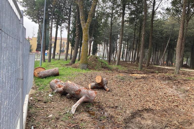 Lavori parco Serra Venerdì