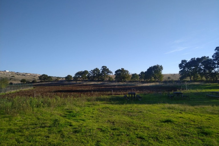 alberi parco murgia materana